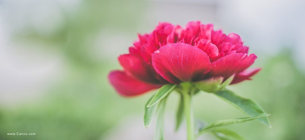 Flower photo from Canva